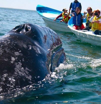 Whale and Dolphin Watching in Mirissa